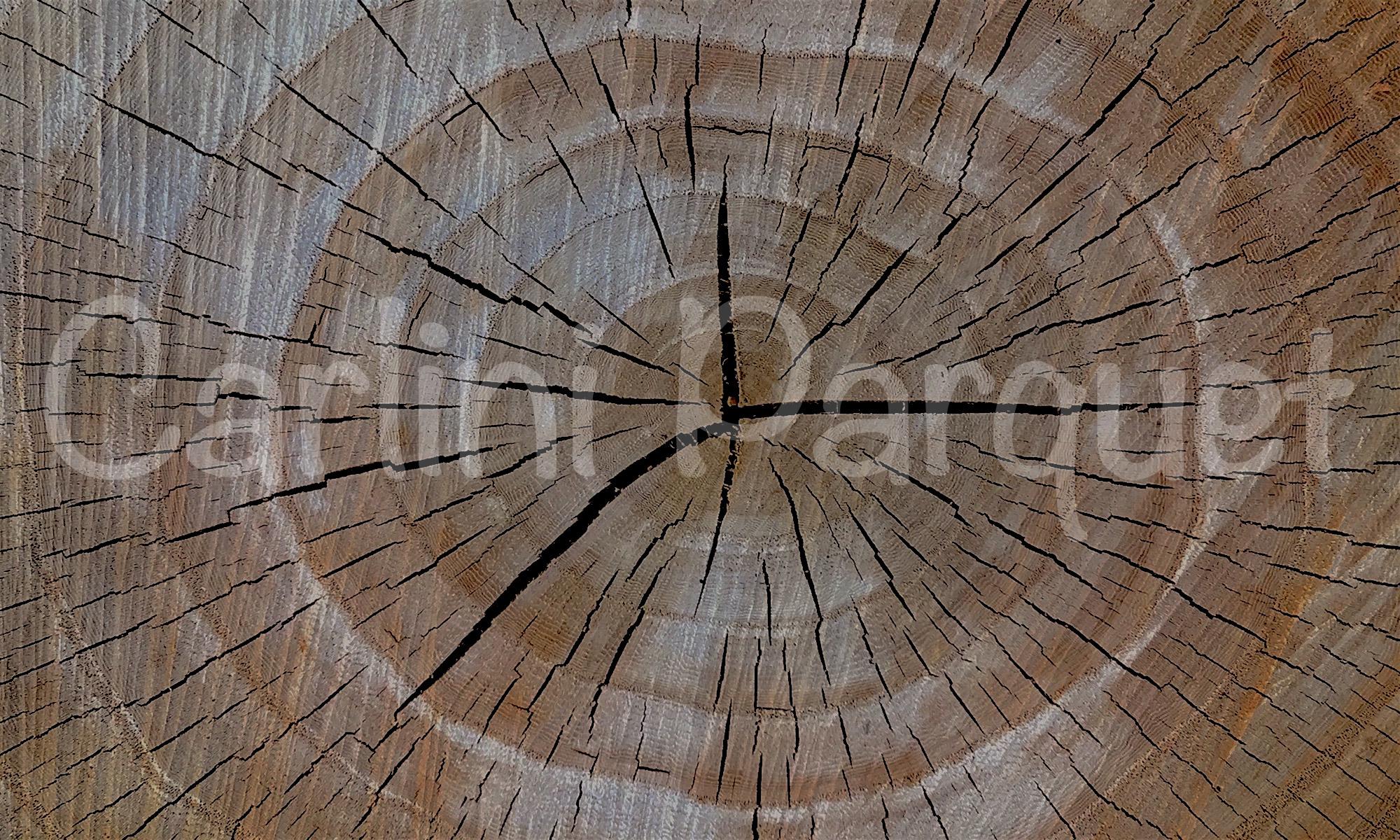 Restauro Parquet Lunga Vita ai Pavimenti in Legno E' grazie alla passione per la lavorazione del legno iniziata 40 anni fa, che la Carlini Parquet esegue restauri di parquet tanto antichi che recenti, rinnovandoli e riportandoli al suo splendore originario, facendo così rivivere un materiale naturale, eterno e prestigioso, quale il legno. Rifacimento parti rovinate e/o mancanti con elementi della stessa essenza e dimensioni originali (anche formati e dimensioni particolari)
